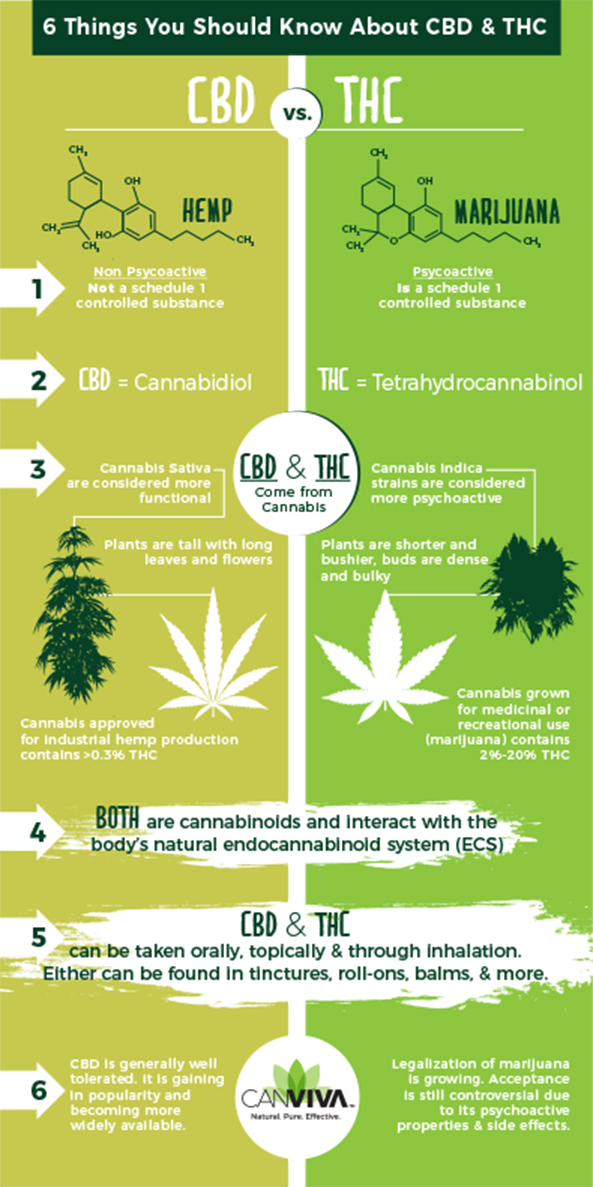 CBD vs THC Infographic