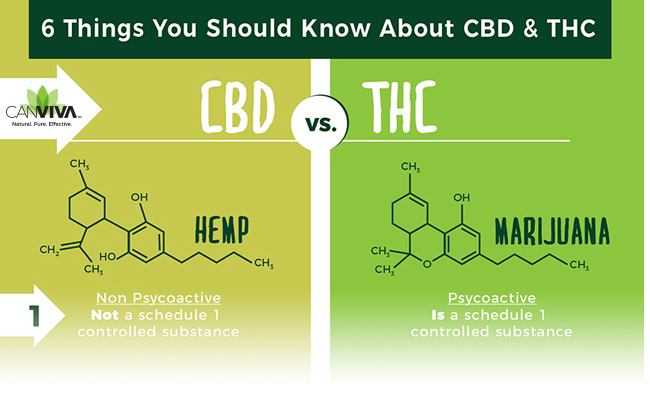 6 Things You Should Know About CBD & THC in 2019