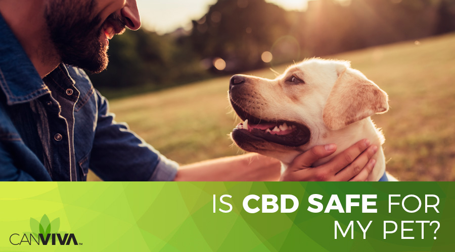 Is CBD Safe For My Pet?