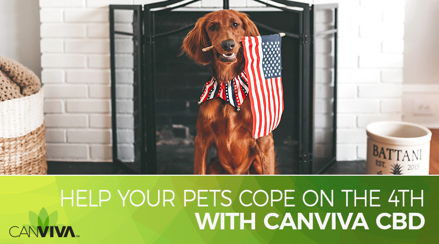Blog: Fireworks can be frightening and stressful for cats and dogs. There are many things you can do to prepare a safe space for your pet, and CBD may help your pet during fireworks.